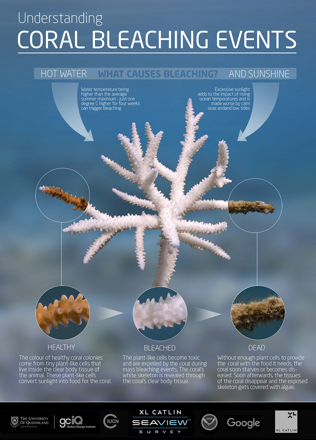 coral-Infographic-1